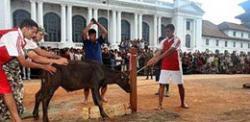 В Непале зарежут более 300 тысяч жертвенных животных